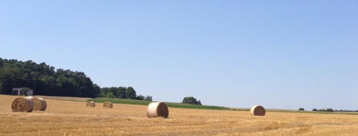 Sommer, das Korn wird eingefahren